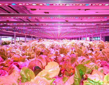 Linear LED Lighting for Vertical Farms