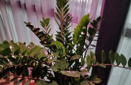 תאורה אגרונומית לצמחי נוי | מלון בראון ביץ' האוס