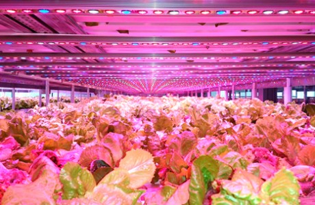 Linear LED Lighting for Vertical Farms
