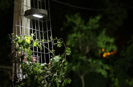 light up your garden!